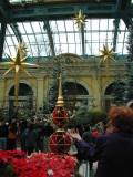 Stars above the Atrium
