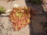 More Aloe/Botanical Gardens