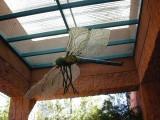 DragonFly/Phoenix Zoo