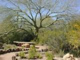 Palo Verde/Resting place