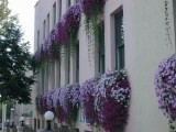 Floral Decorations in Downtown Bloomington