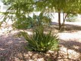 My Arizona Frontyard