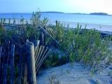 Fence line along the beach
