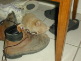 Amongst the shoes