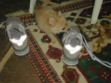 She loves shoes!