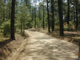 Friendly pines area