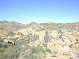 A walk near Tortilla Flat, AZ