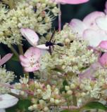 Azalea Flower Hosting a Wasp