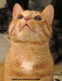 Noel's Kitty