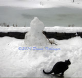 Rocky Kitty for Contrast...Headless Snowman