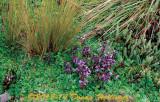 Ecuador Highlands Wildflowers