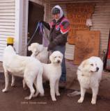 Lee V. Enjoying Marie's Dogs