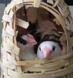 Birdies Cuddling
