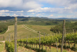 Dievole Vineyard