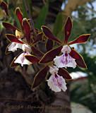 Orchids Growing in Restaurant Garden