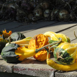 Gourds At Rose Silloway's