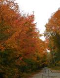 Leaves on Turnpike Road