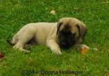 Rene's Puppy:  Marley
