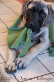 Marley got my scarf