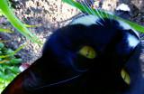 Looking downnon Jimi Kitty