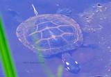 900.turtle.0343.copy.jpg