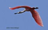 Cuba and Birds 2014