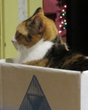 Maizie in the Box