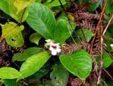 900.Flora1498.copy.jpg