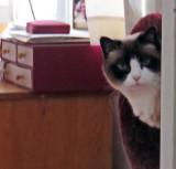 Fuzzy Lilicat