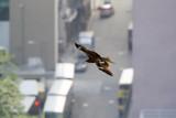 Birds From My Balcony