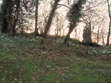 Snowdrops  on  the  motte  (2)