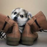 posando entre las botas