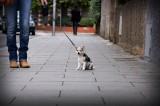 primer paseo