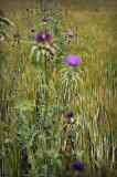 verde y lila
