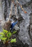 en la rama