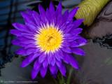 SuzyWalkerP7280113.jpg