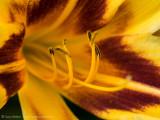 SuzyWalker_7280369.jpg