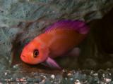 Sleeping fish - Misool
