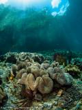Reef scene 2 - Aljui Bay