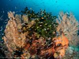 bursting with life - Dampier Strait (EM1)