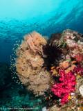 Reef scene - Dampier Strait (EM1)