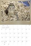 2014_03 -- Calendrier de Mars -- March Calender -- Québec Oiseaux