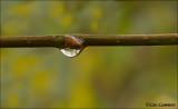 Drop - Druppel_MG_6265