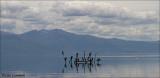 Prespa Lake Macedonia_MG_8857