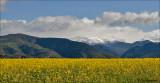 Pyrenees Spain