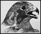 Dibujo de halcón