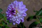 More Flowers in Debra's Yard