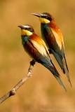 Birding Trips