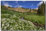 Colorado Wildflowers atop Berthoud Pass 1