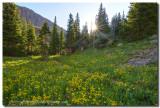 Colorado Wildflowers and Blue Lakes Sunshine
